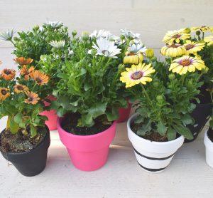terracotta bloempotjes in kleur geschilderd met plantjes