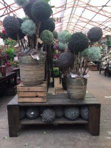 Zijdebloemen en planten