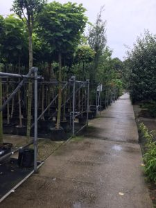 De bomenkwekerij