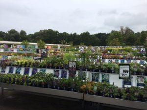 Buitenplanten buiten